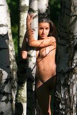 Sanjal - Birch Wood  09