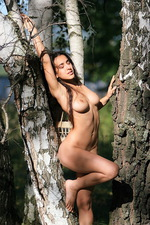 Sanjal - Birch Wood  11