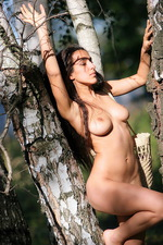 Sanjal - Birch Wood  12